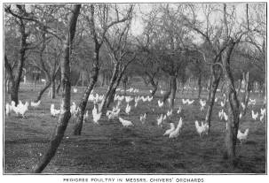 Pedigree poultry in Messrs Chivers' Orchards