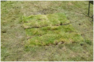 Histon Archaeology project - grass returned